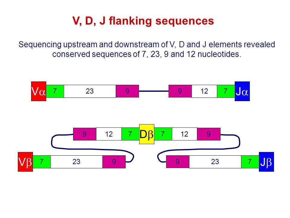 V, D, J flanking sequences