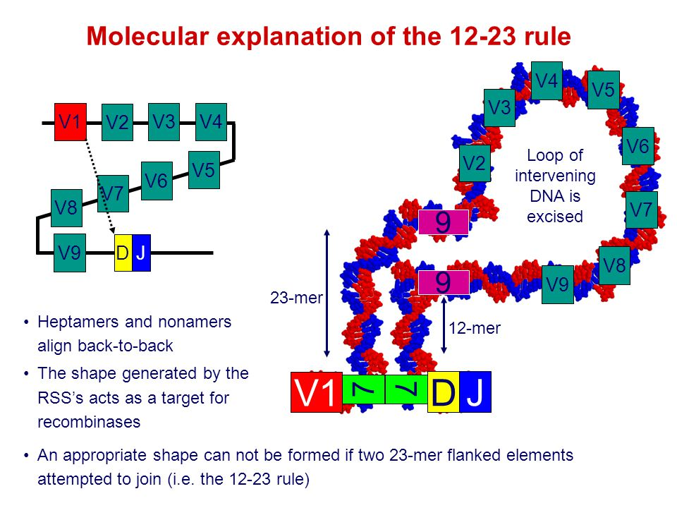 Molecular explanation of the rule