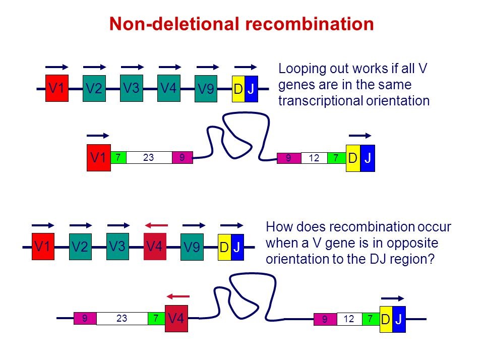 Non-deletional recombination