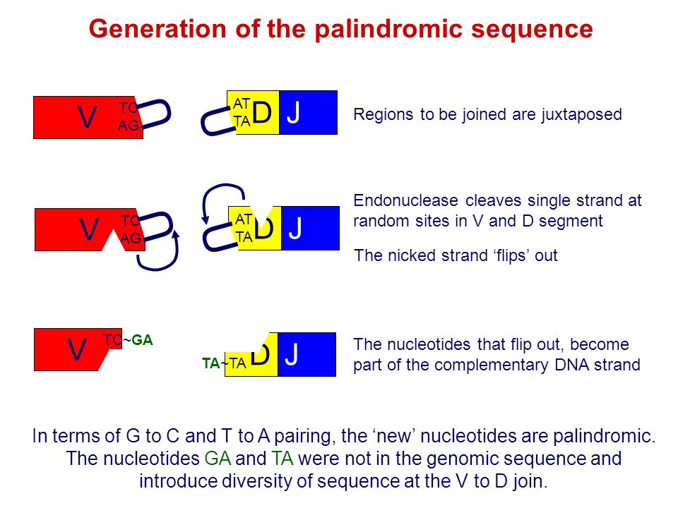 Generation of the palindromic sequence