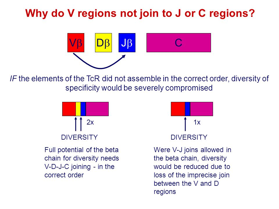 Why do V regions not join to J or C regions
