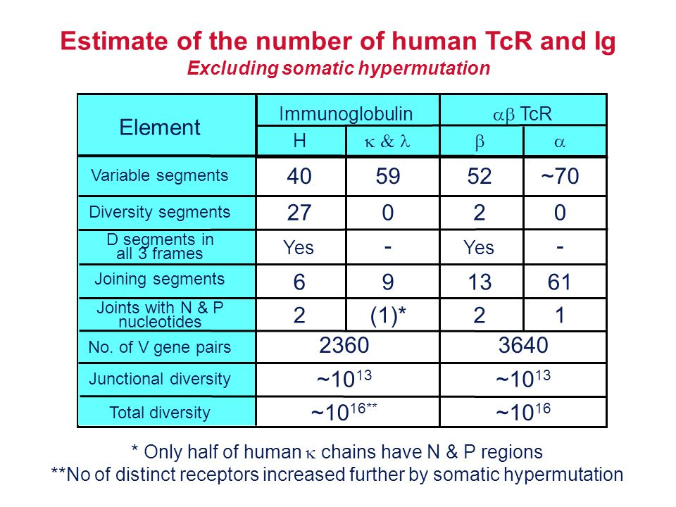 Estimate of the number of human TcR and Ig