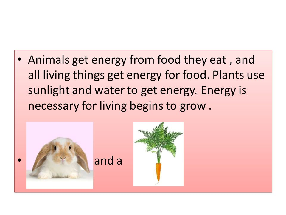 Animals get energy from food they eat , and all living things get energy for food. Plants use sunlight and water to get energy. Energy is necessary for living begins to grow .
