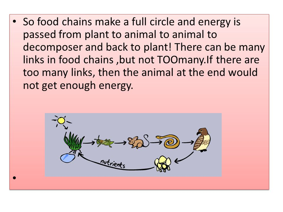 So food chains make a full circle and energy is passed from plant to animal to animal to decomposer and back to plant.