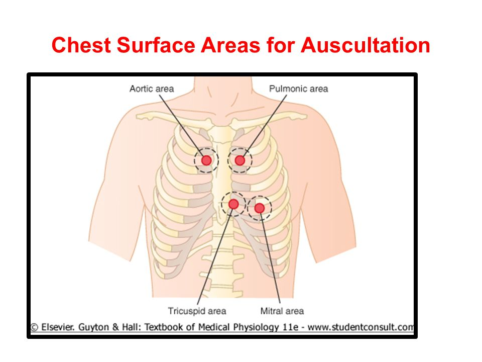 Chest Surface Areas for Auscultation