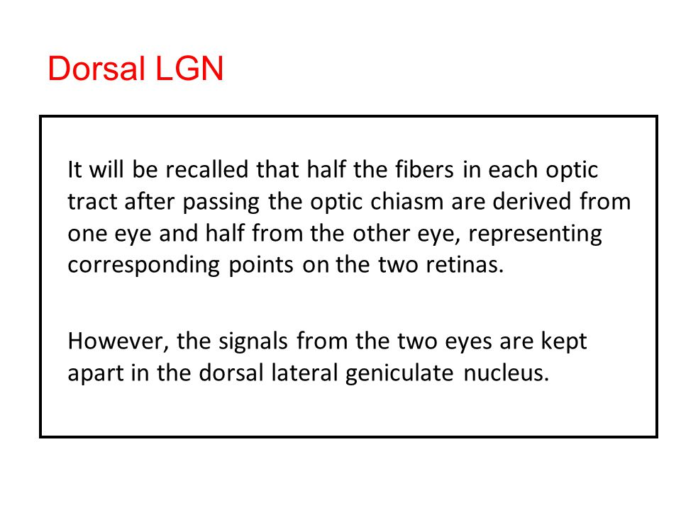 Dorsal LGN