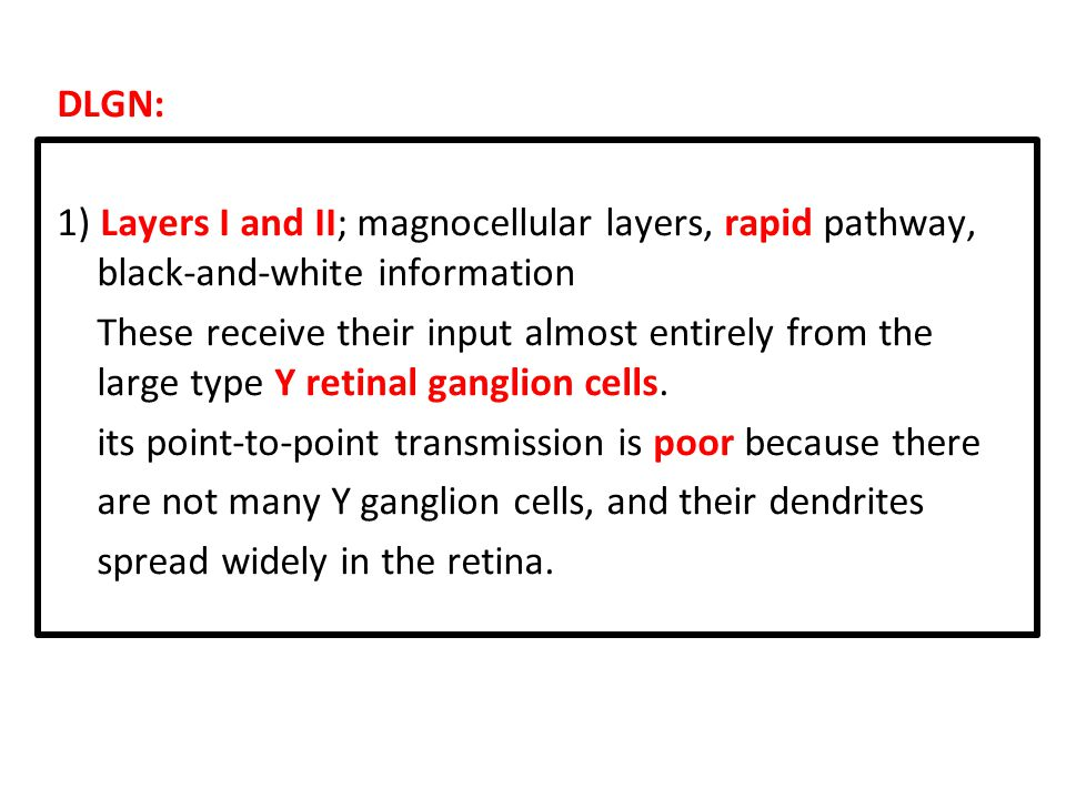 DLGN: 1) Layers I and II; magnocellular layers, rapid pathway, black-and-white information These receive their input almost entirely from the large type Y retinal ganglion cells.