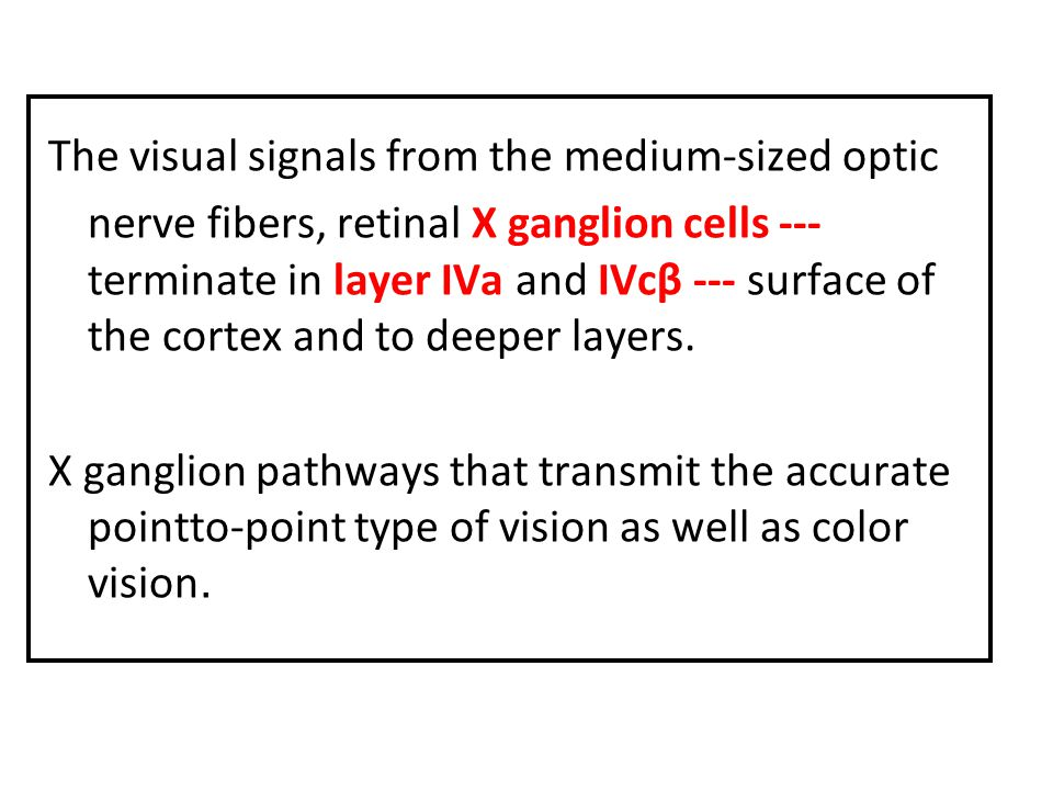 The visual signals from the medium-sized optic nerve fibers, retinal X ganglion cells --- terminate in layer IVa and IVcβ --- surface of the cortex and to deeper layers.