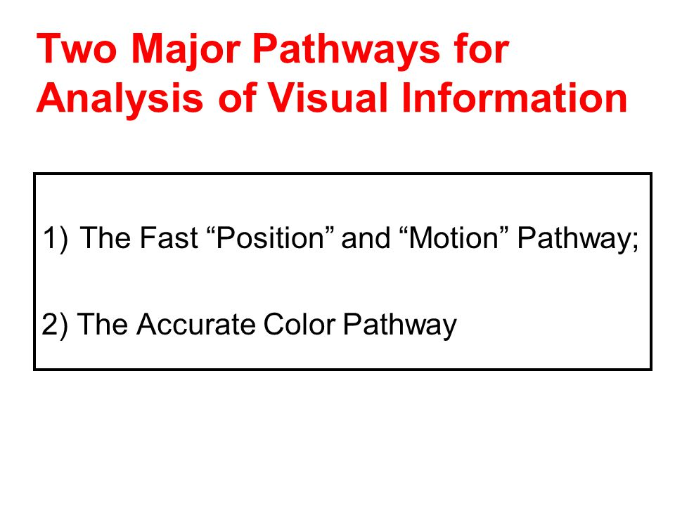 Two Major Pathways for Analysis of Visual Information