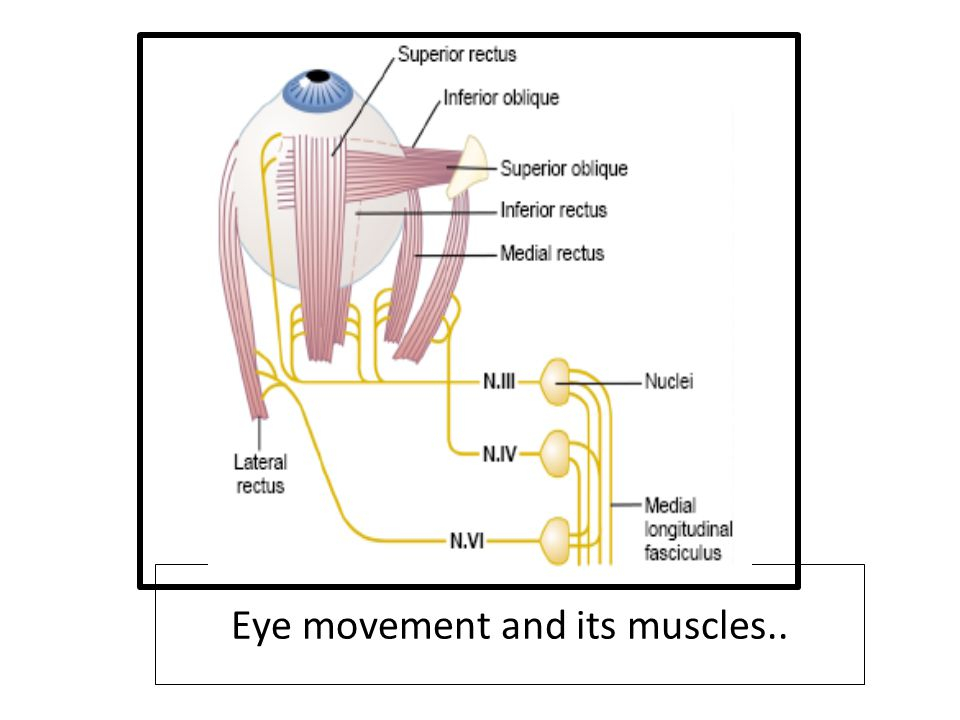 Eye movement and its muscles..