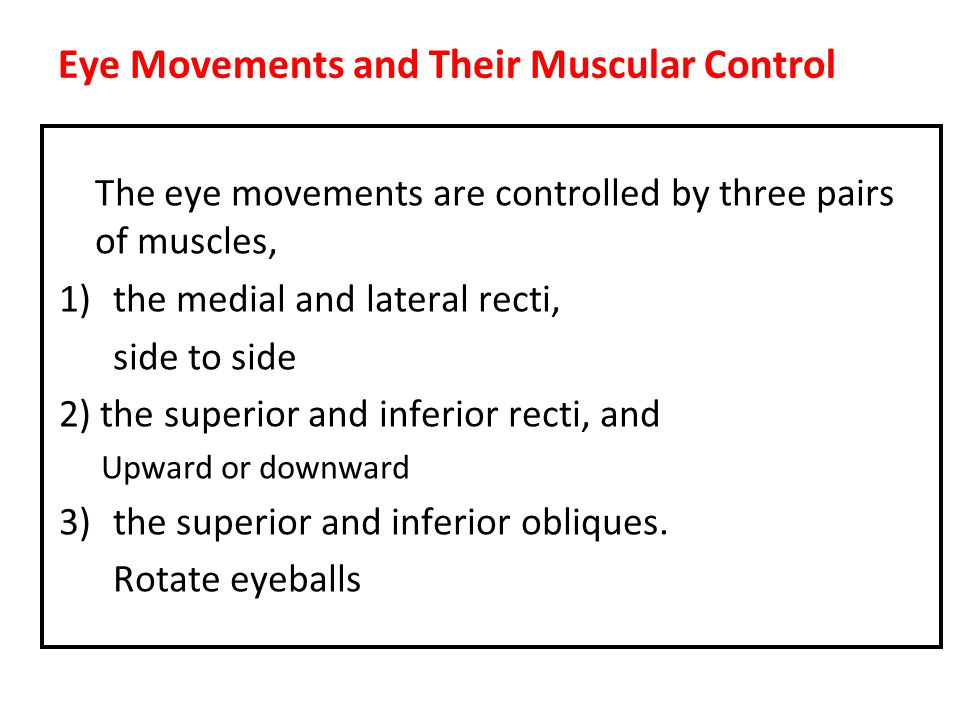 Eye Movements and Their Muscular Control
