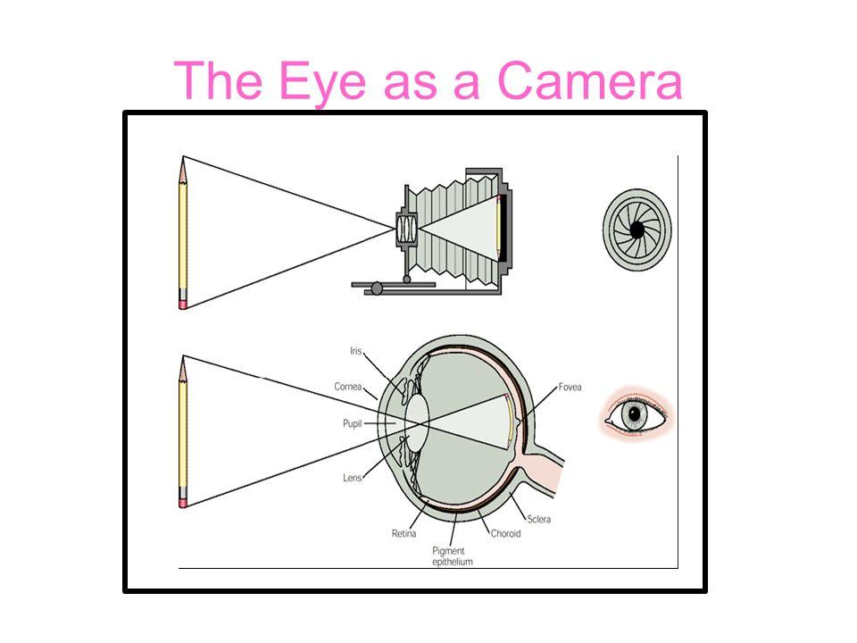 The Eye as a Camera