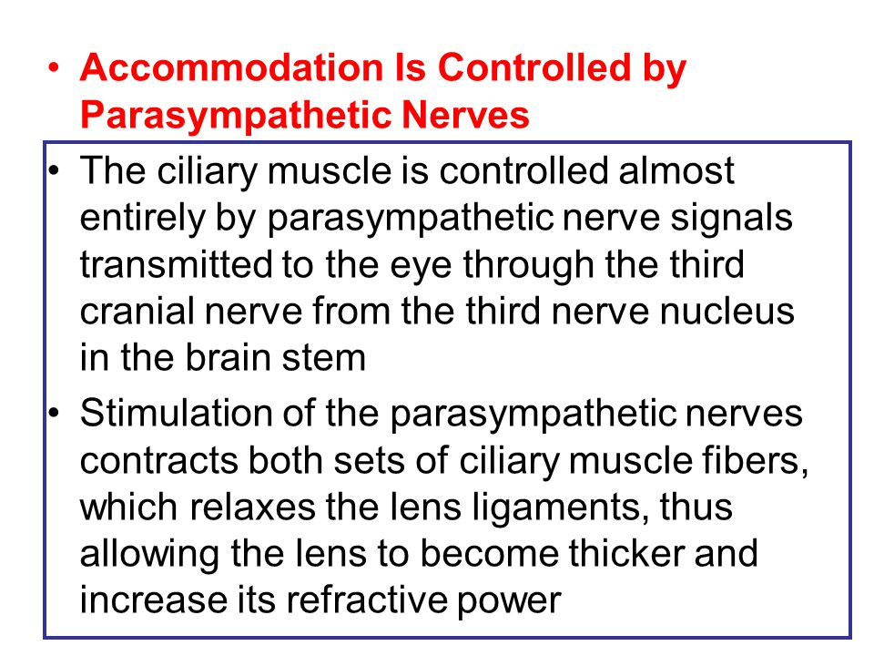 Accommodation Is Controlled by Parasympathetic Nerves