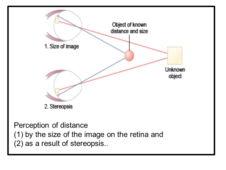 Perception of distance