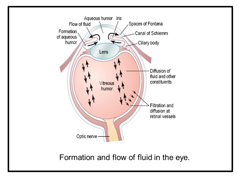 Formation and flow of fluid in the eye.