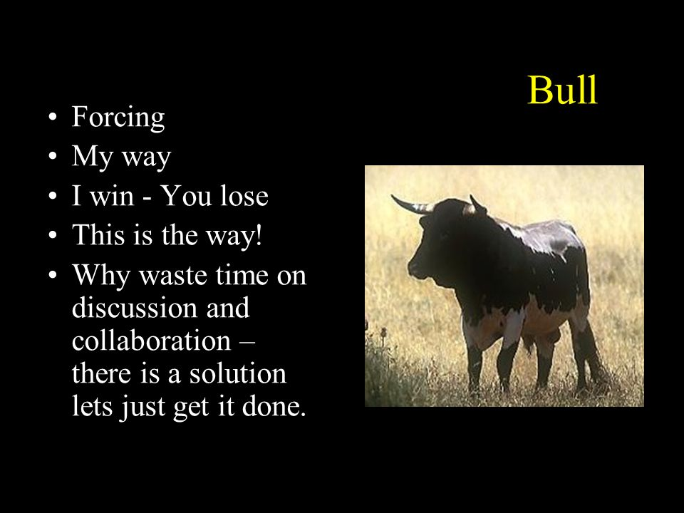Bull Forcing My way I win - You lose This is the way!