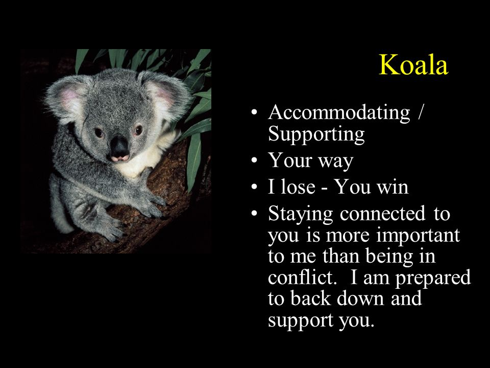 Koala Accommodating / Supporting Your way I lose - You win