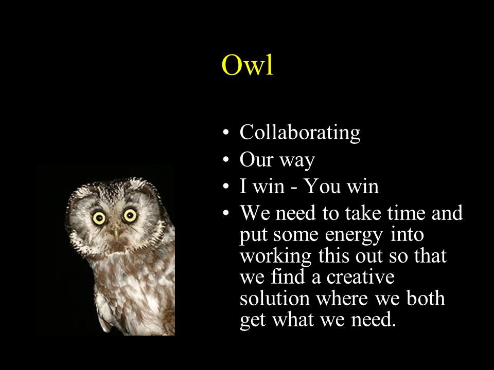 Owl The Owl Collaborating Our way I win - You win
