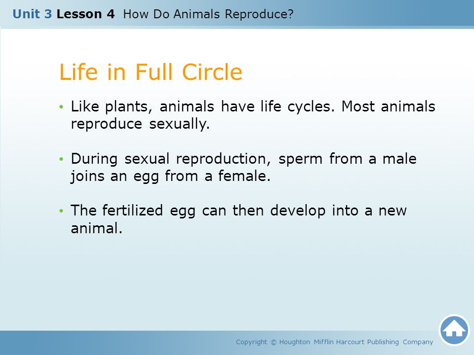 Unit 3 Lesson 4 How Do Animals Reproduce