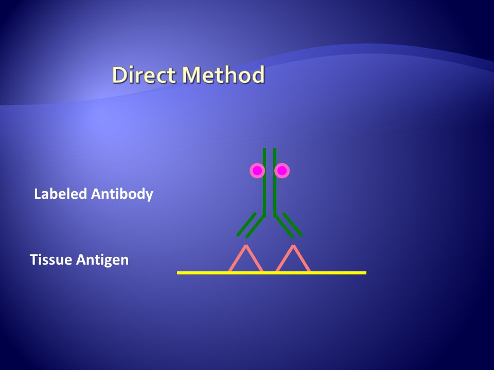 Direct Method Labeled Antibody Tissue Antigen