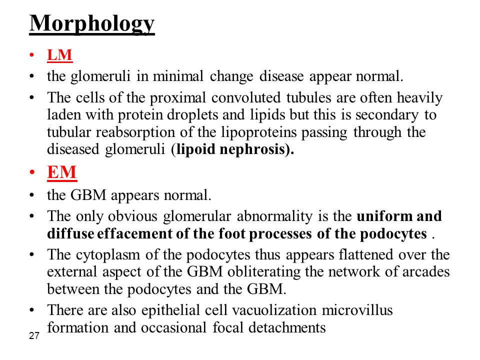 Morphology LM. the glomeruli in minimal change disease appear normal.
