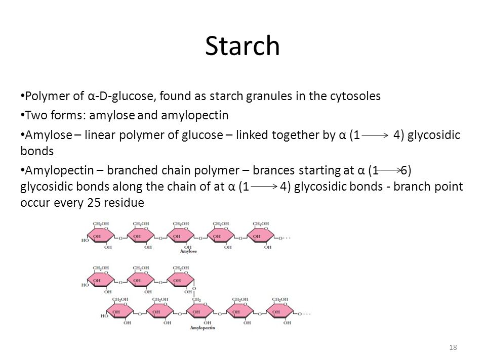 Starch Polymer of α-D-glucose, found as starch granules in the cytosoles. Two forms: amylose and amylopectin.