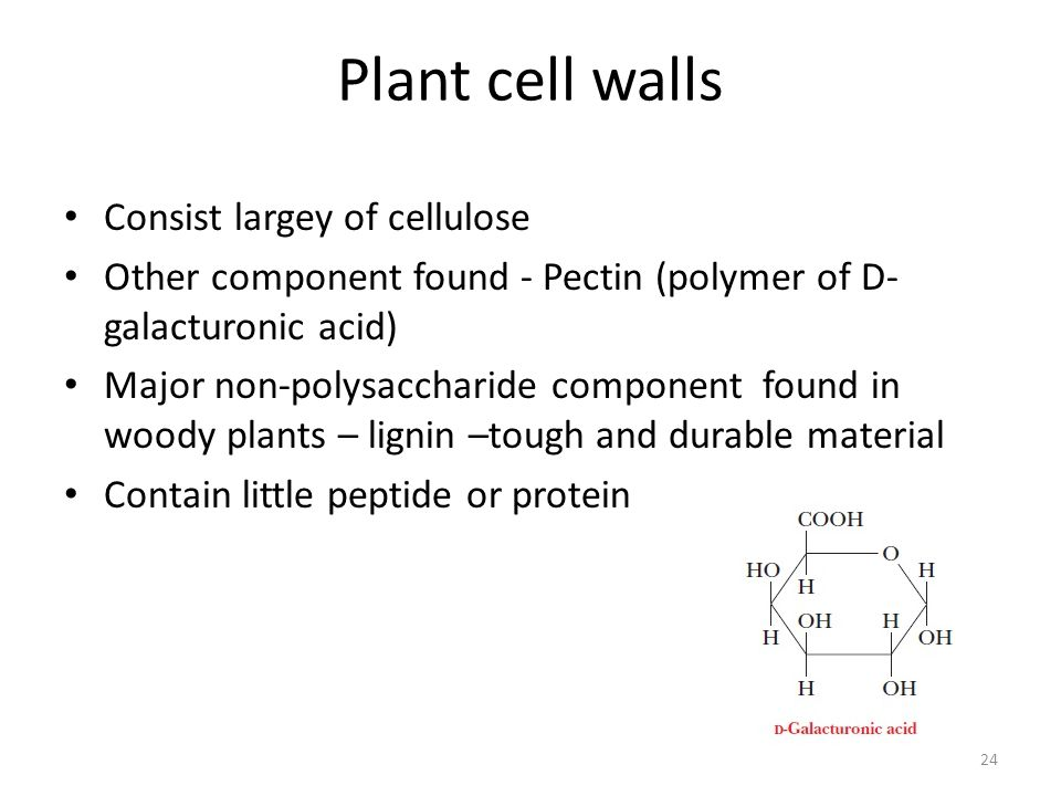 Plant cell walls Consist largey of cellulose