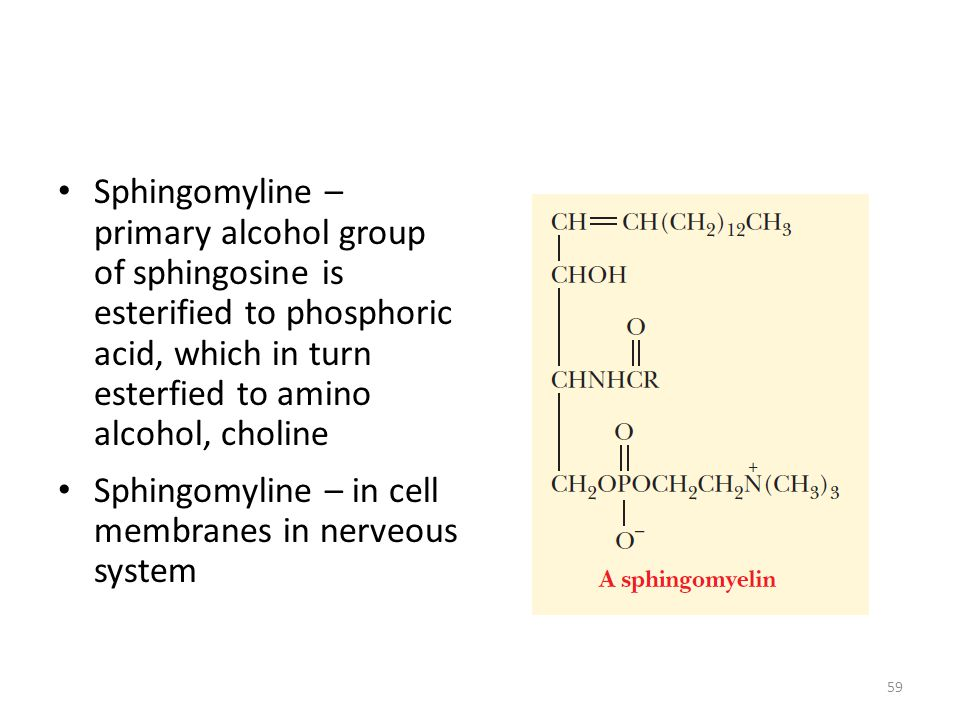 Sphingomyline – primary alcohol group of sphingosine is esterified to phosphoric acid, which in turn esterfied to amino alcohol, choline