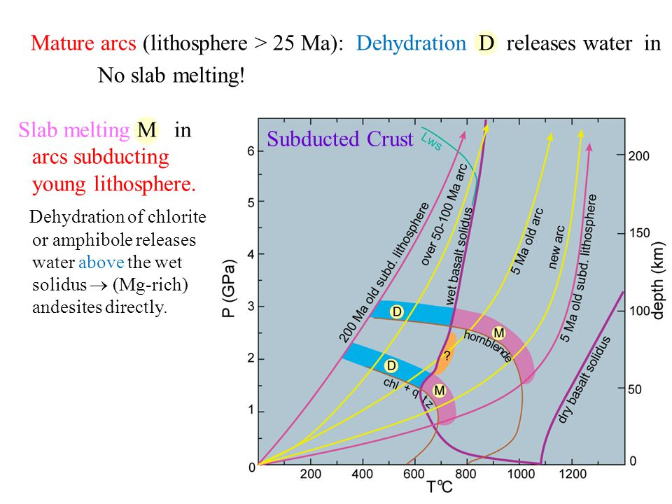 Mature arcs (lithosphere > 25 Ma): Dehydration D releases water in