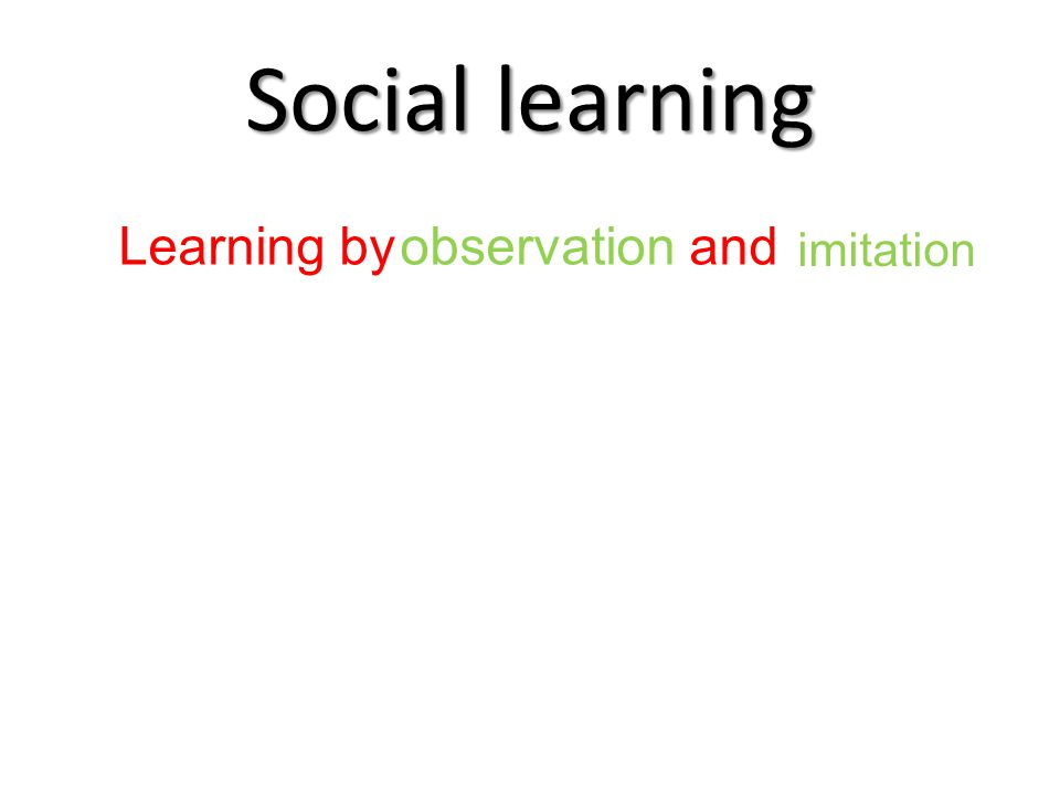 Social learning Learning by and observation imitation