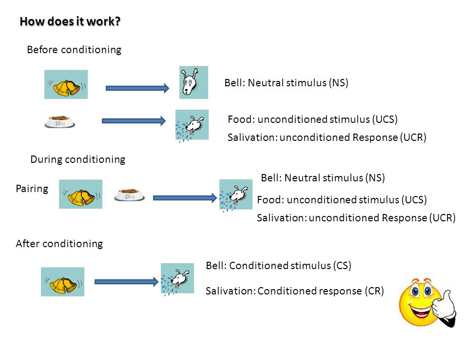 How does it work Before conditioning Bell: Neutral stimulus (NS)