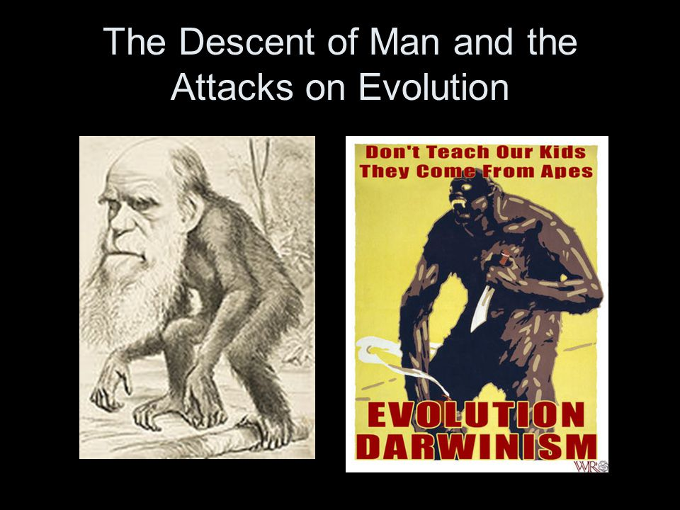 The Descent of Man and the Attacks on Evolution