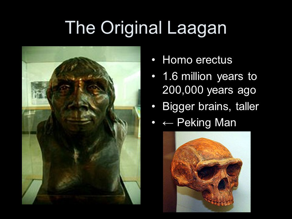 The Original Laagan Homo erectus