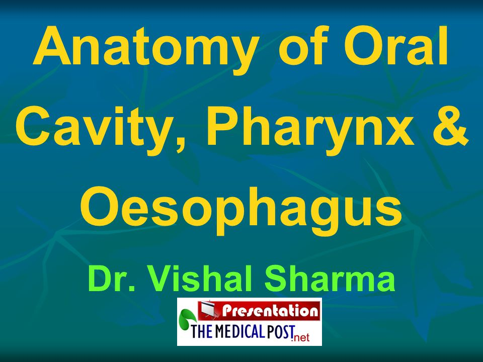 Anatomy of Oral Cavity, Pharynx & Oesophagus