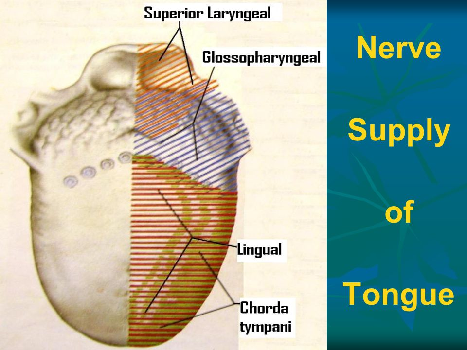 Nerve Supply of Tongue