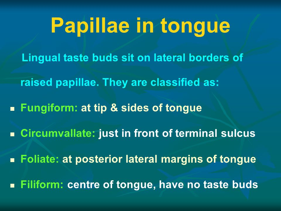 Papillae in tongue Lingual taste buds sit on lateral borders of raised papillae. They are classified as: