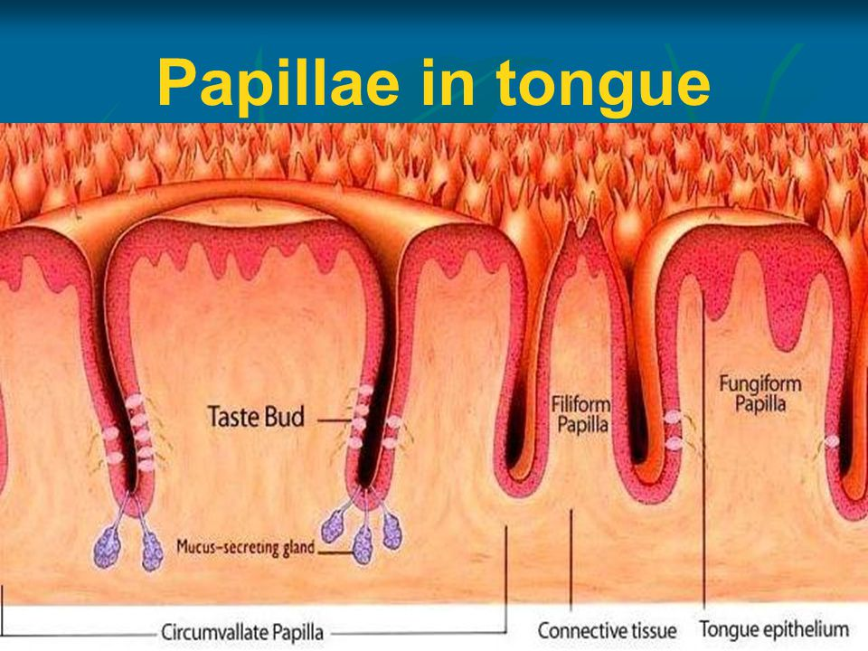 Papillae in tongue