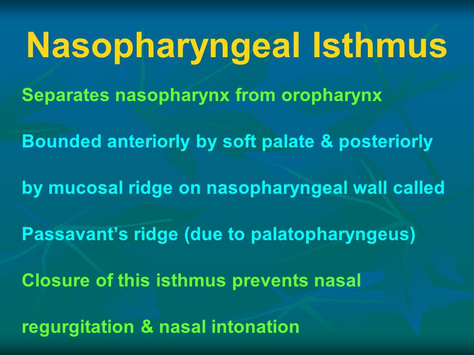 Nasopharyngeal Isthmus