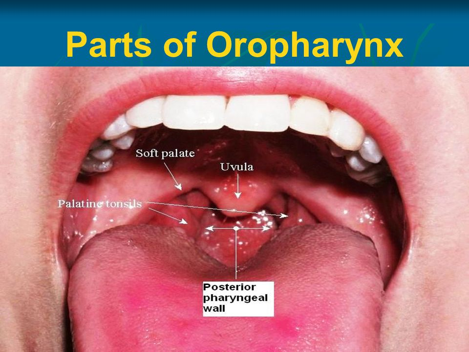 Parts of Oropharynx