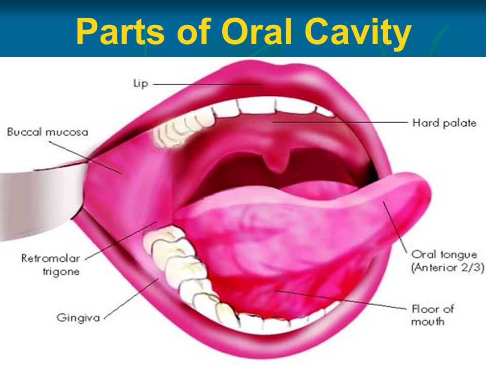 Anatomy of oral cavity pharynx oesophagus ppt video for Floor of mouth anatomy
