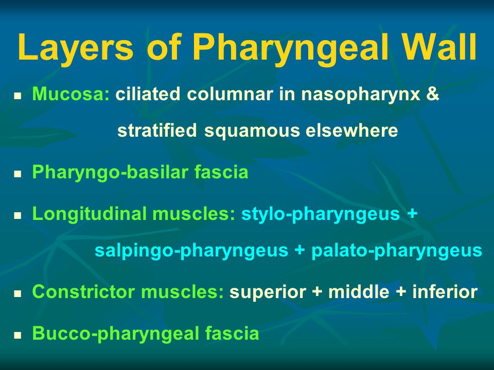 Layers of Pharyngeal Wall