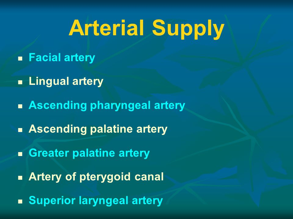 Arterial Supply Facial artery Lingual artery