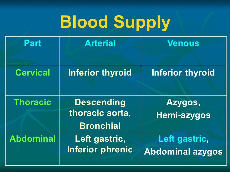 Descending thoracic aorta, Left gastric, Inferior phrenic