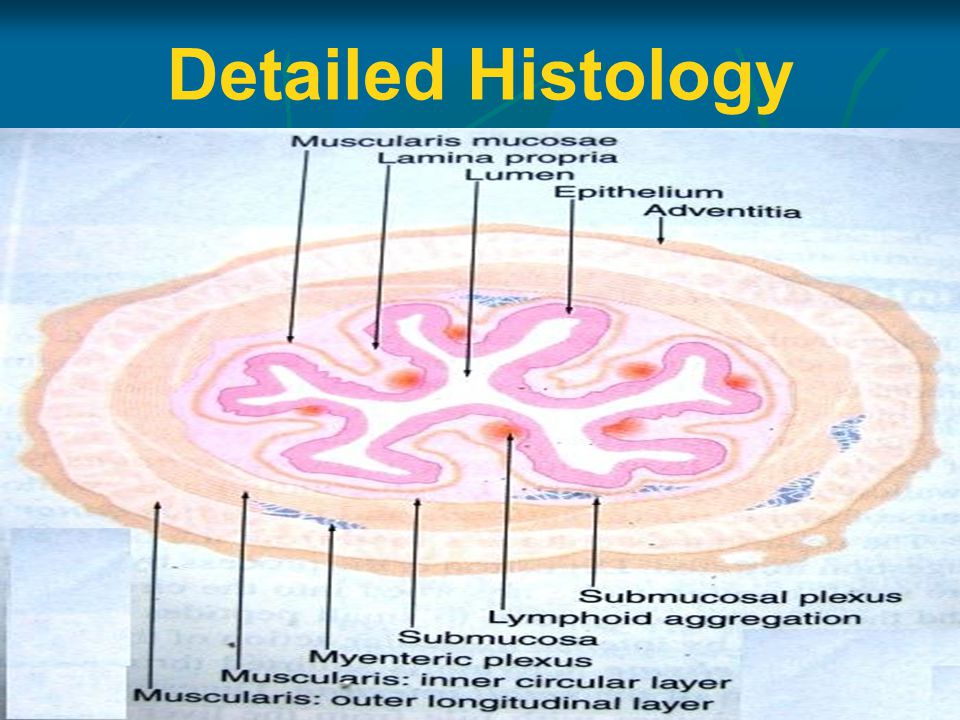 Detailed Histology