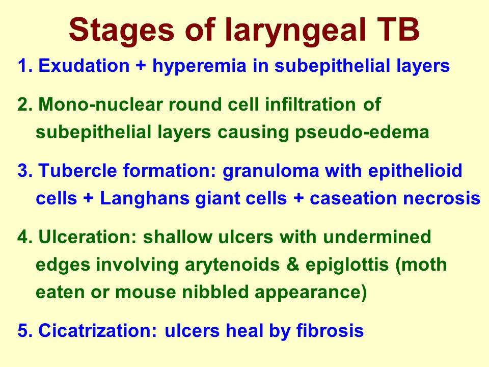Stages of laryngeal TB 1. Exudation + hyperemia in subepithelial layers.