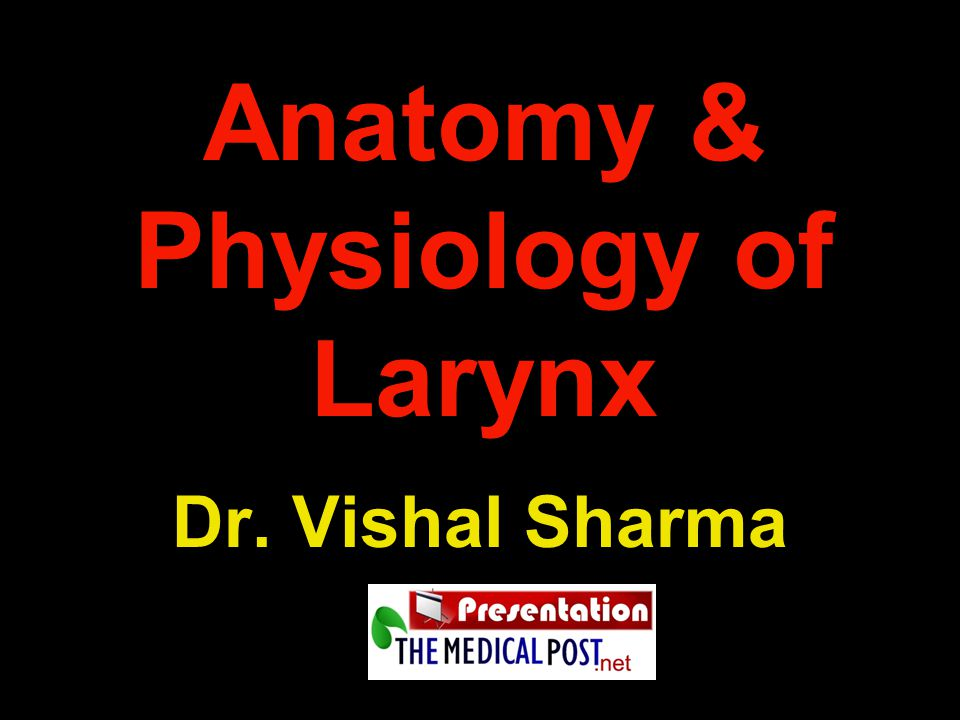 Anatomy Physiology Of Larynx Ppt Video Online Download