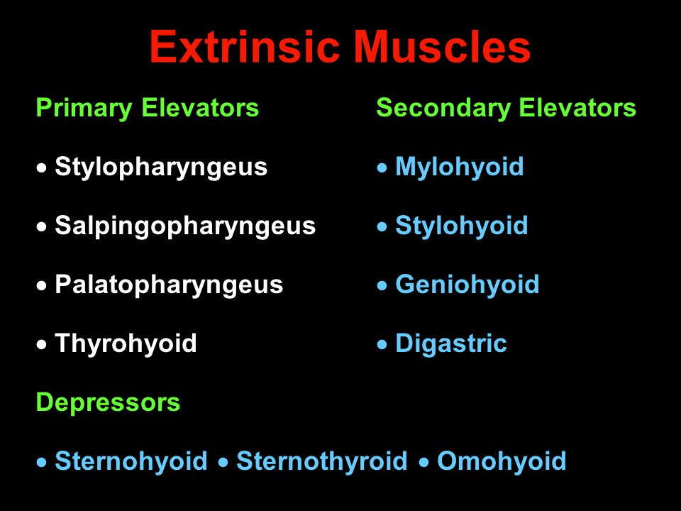 Extrinsic Muscles Primary Elevators Secondary Elevators