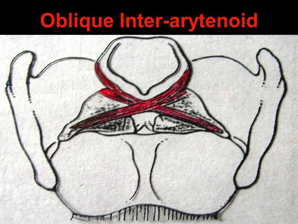 Oblique Inter-arytenoid