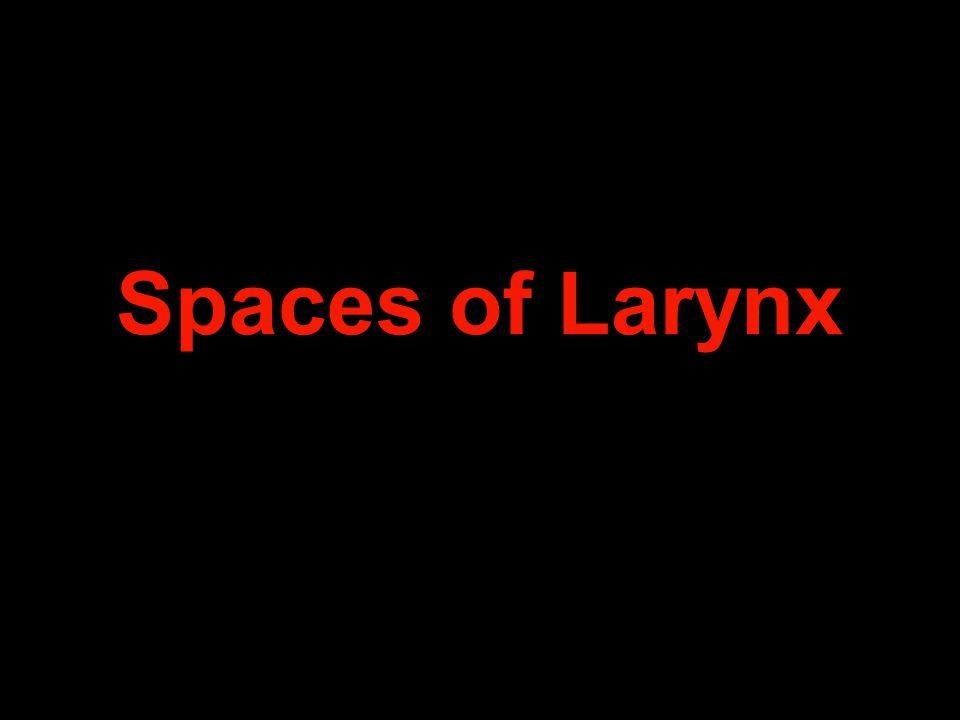 Spaces of Larynx