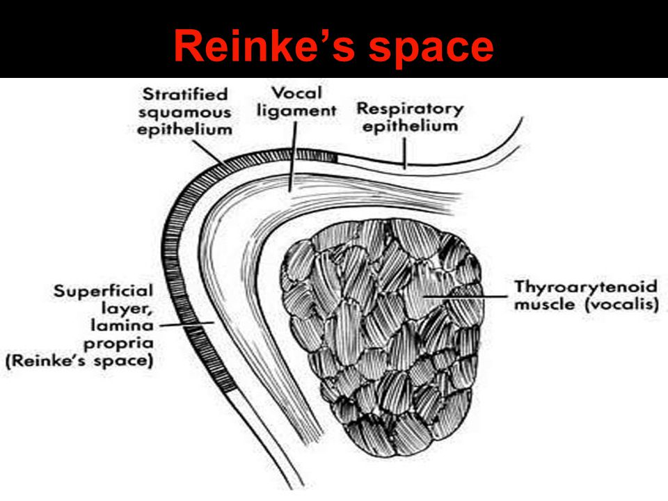 Reinke's space